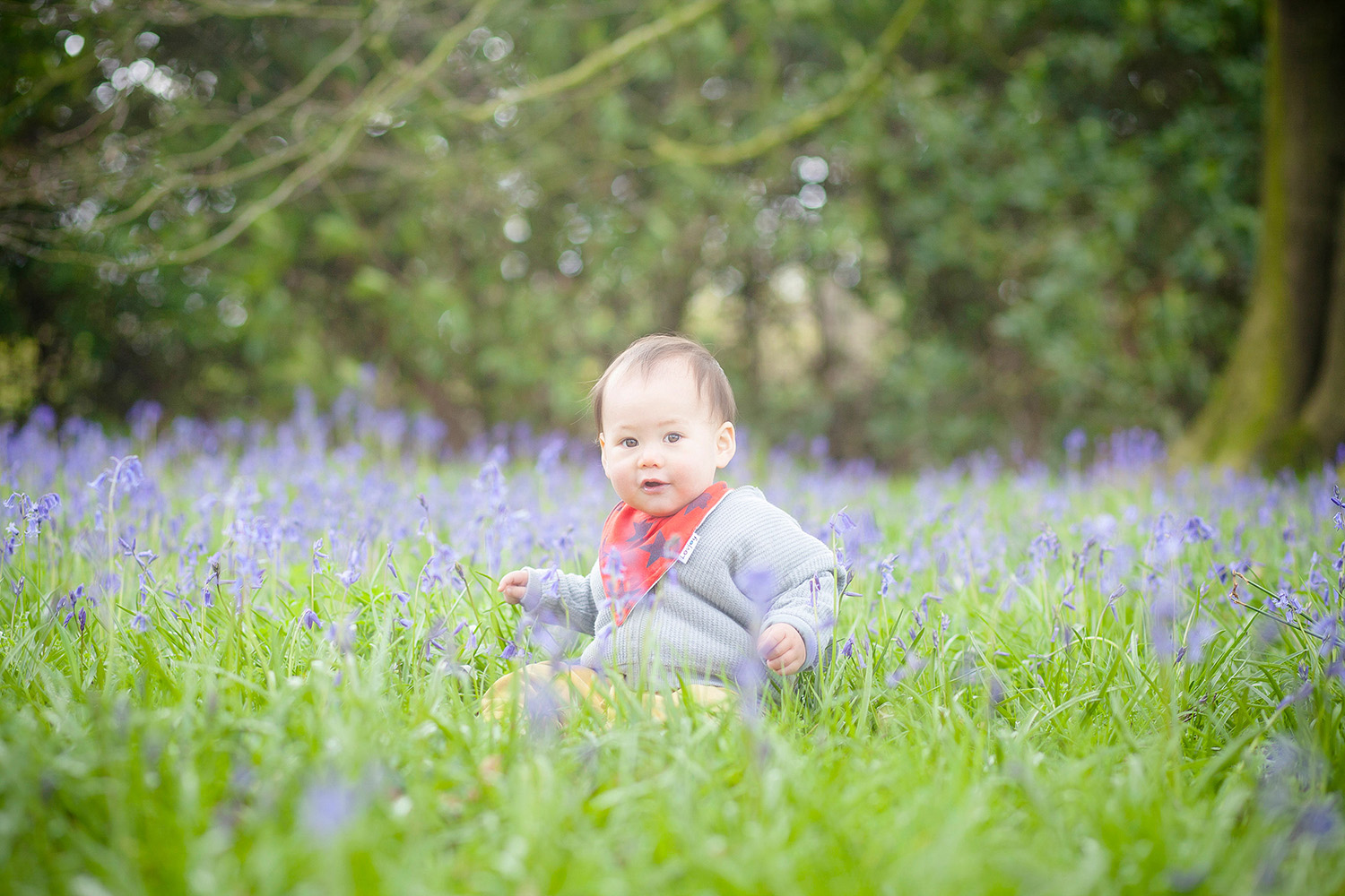 Bluebell photography photography in Lyme Park Cheshire of a toddler surrounded by Bluebells at Lyme Park