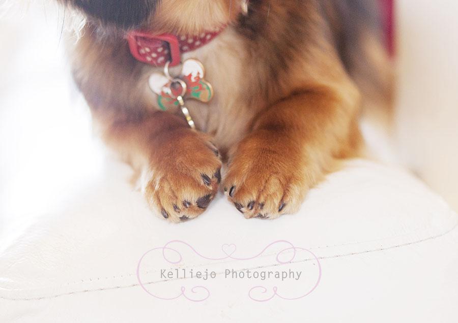 Frankie the Sausage dog.